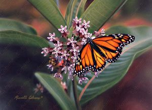 Butterfly and Milkweed