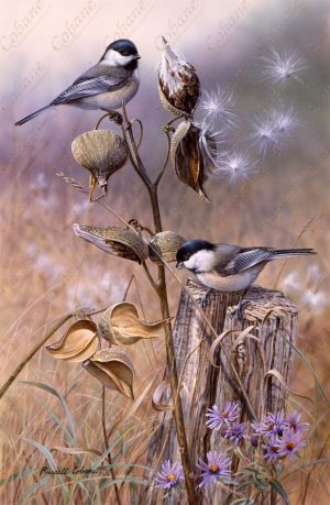 Chickadee and Asters
