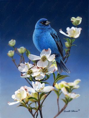 Indigo Bunting and Dogwood