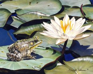 Among the Waterlilies