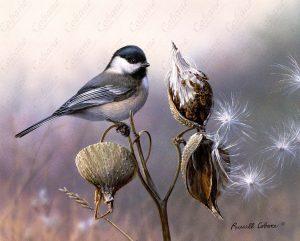 Chickadee and Milkweed