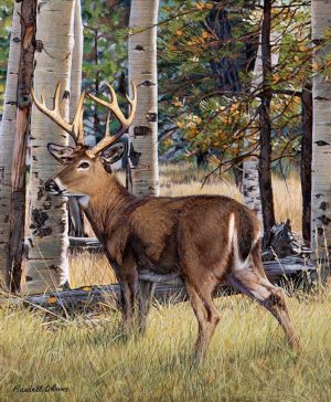 Fall Whitetail