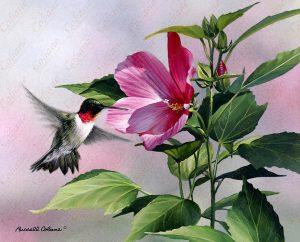 Hibiscus Hummingbird