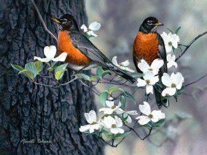 Springtime Robins