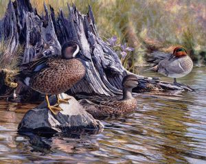 Trio of Teals