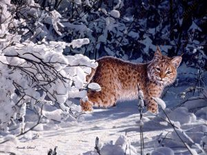 Winter Bobcat