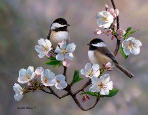 Cherry Blossom Chickadee