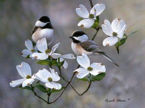 Springtime Chickadees