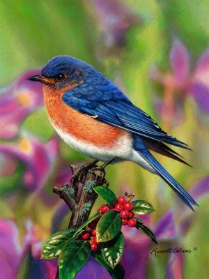 Holly Berry Bluebird