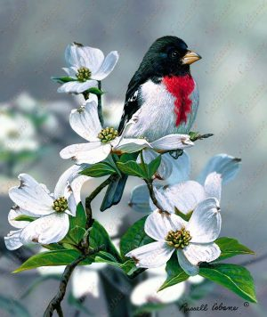 Spring Grosbeak